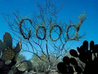 Treegood