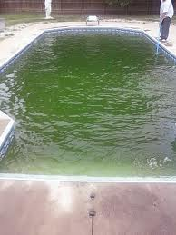 Poolalgae